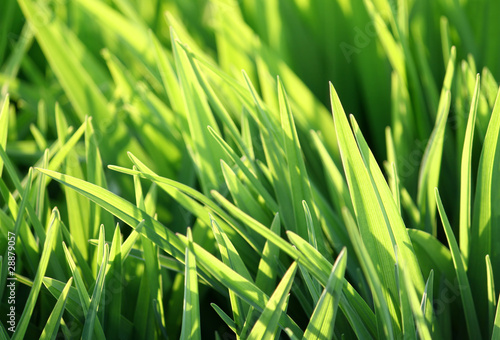 green grass and sunlight