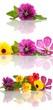 Blüten mit Spiegelung Set