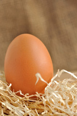 Uovo su letto di paglia