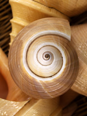 swirl of shell