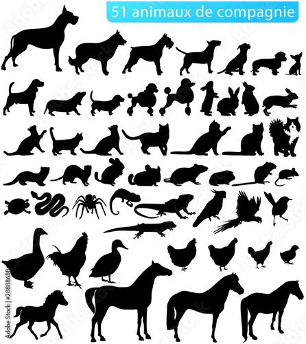 51 animaux de compagnie