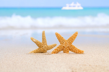 two starfish on beach, blue sea and white boat