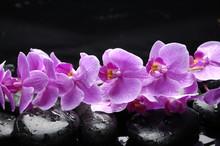 Ligne de fleur d'orchidée cattleya et pierre avec des gouttes d'eau