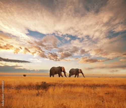 Foto op Plexiglas Olifant Elephant