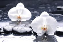 Spa nature morte avec orchidée sur des gouttes d'eau
