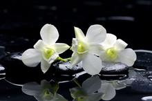 Orchidée pourpre et pierres noires avec la réflexion