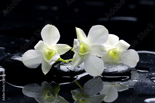 Purple orchid and black stones with reflection - 28908662