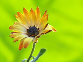 Blütenleuchten