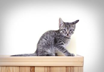 kitten striped sitting