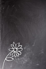 daisy drawn in chalk