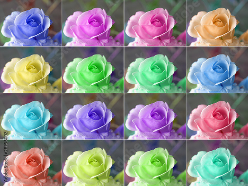 poster of Popart roses