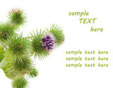 bur thorny flower. (Arctium lappa) with room for text poster