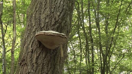 champignon sur un tronc d arbre de nividic vid o libre de droits 28957019 sur. Black Bedroom Furniture Sets. Home Design Ideas
