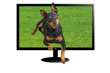 Tv 3D con cane