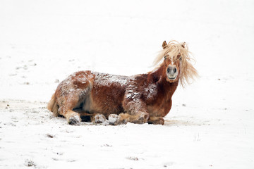 Horse playing in a snowy landscape