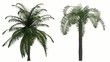 Photorealistic Palms Animated by Wind, with Alpha Channel