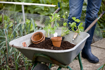 A gardener standing next to a wheelbarrow
