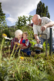 A family filling a kettle on an allotment