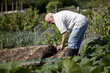 A senior man digging on an allotment