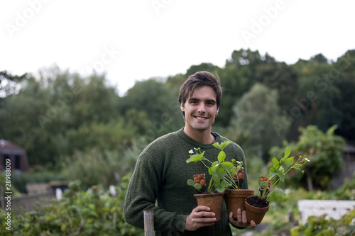 A young man on an allotment, holding strawberry plants