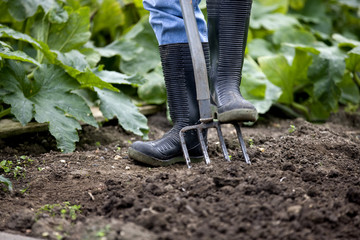 A gardener digging on an allotment