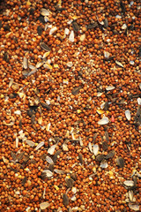 Birdseed Background Wide