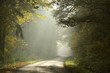 Rural lane in the deciduous forest on a foggy morning