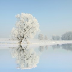 Frosty winter trees against a blue sky with reflection in water