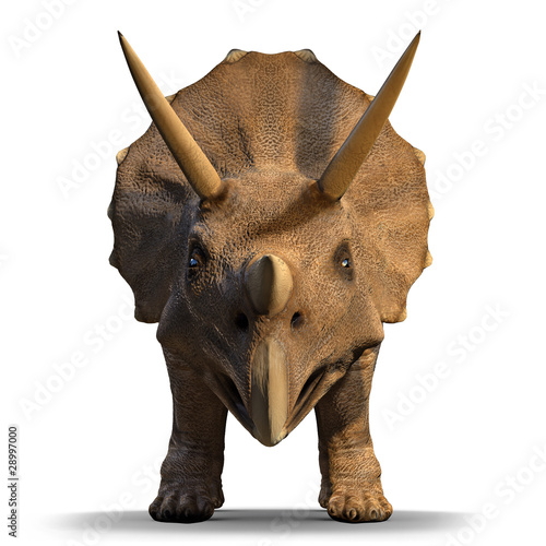 3d Triceratops dinosaur face on