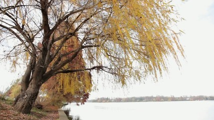 Willow Tree Composition