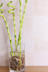 bamboo in vaso di vetro