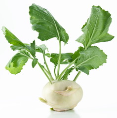 Cabbage kohlrabi on a white background