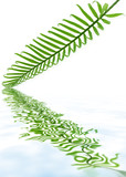 feuille juvénile de palmier sagoutier