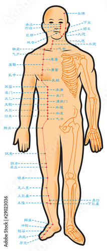 Chinese acupuncture points scheme, vector