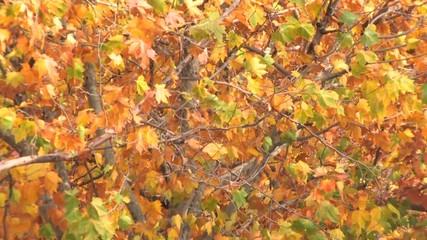 Autumnal lush foliage