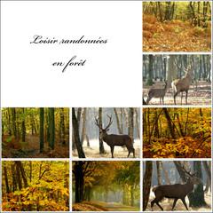 loisir randonnée en forêt