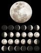 Lunar Phases - 29044607