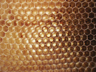 beeswax background