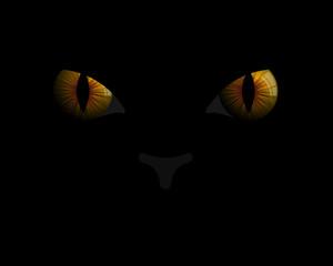 Cat eyes in darkness