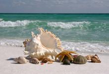 Coquilles sur plage de sable blanc de Floride