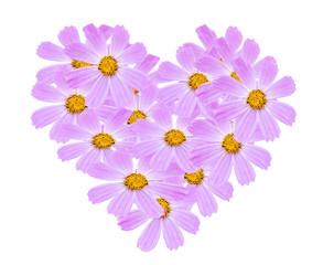 Сердце из цветов космеи