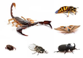 insectes et scorpion