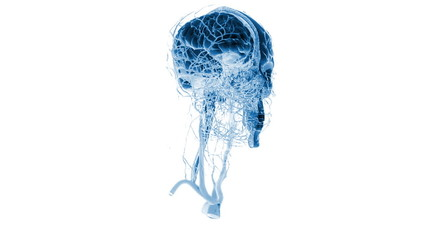 Human x-ray head, medical background