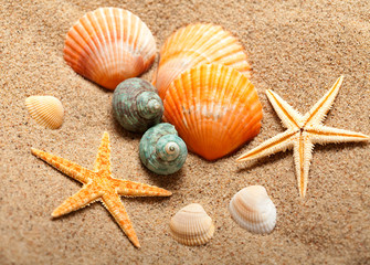 Sea life - shells and starfish