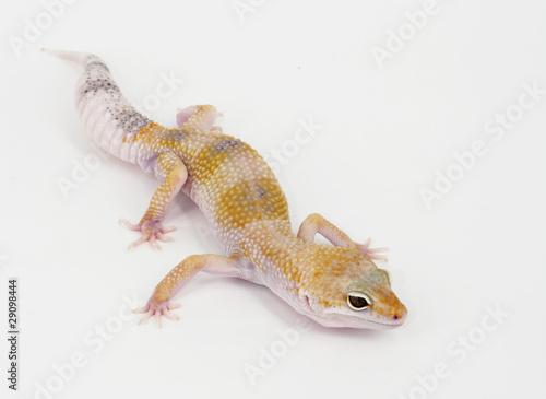 Deurstickers Luipaard leopard gecko