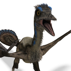 Dinosaur Archaeopteryx. 3D rendering with clipping path and
