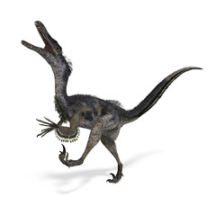 Dinosaur Velociraptor. 3D rendering with clipping path and