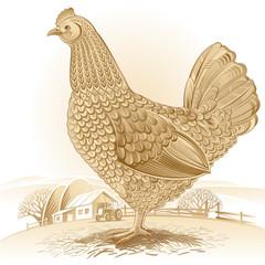 Rural chicken