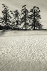 Snowy Winter Day