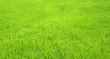Fußball Rasen Textur - Soccer Grass